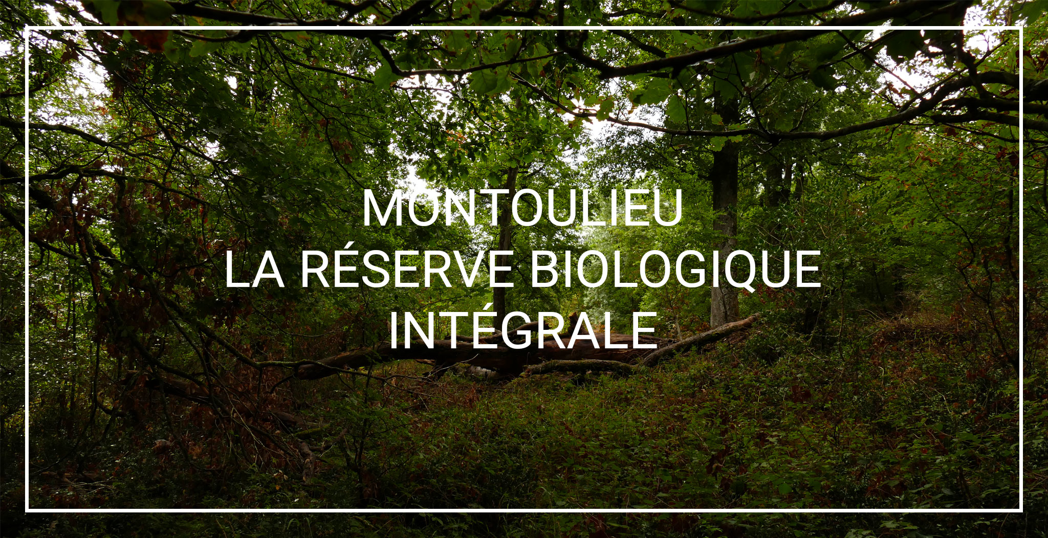 Galerie photo SN1_Montouliieu_la_reserve_biologique_intégrale